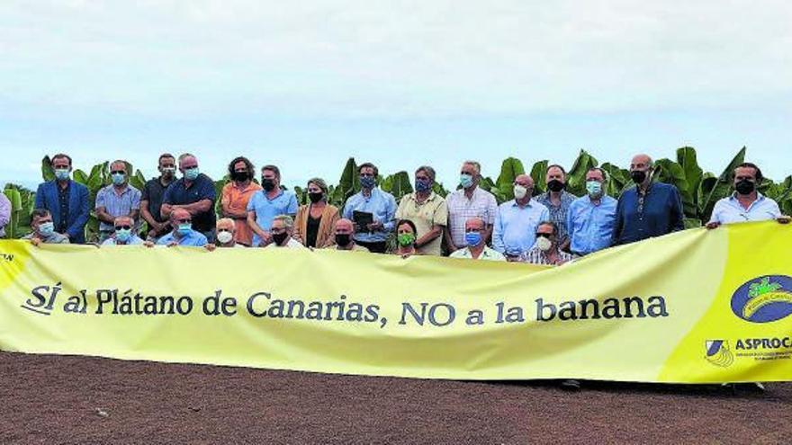 El plátano lanza un SOS 'in extremis' al PSOE: «El sector morirá con la ley alimentaria»