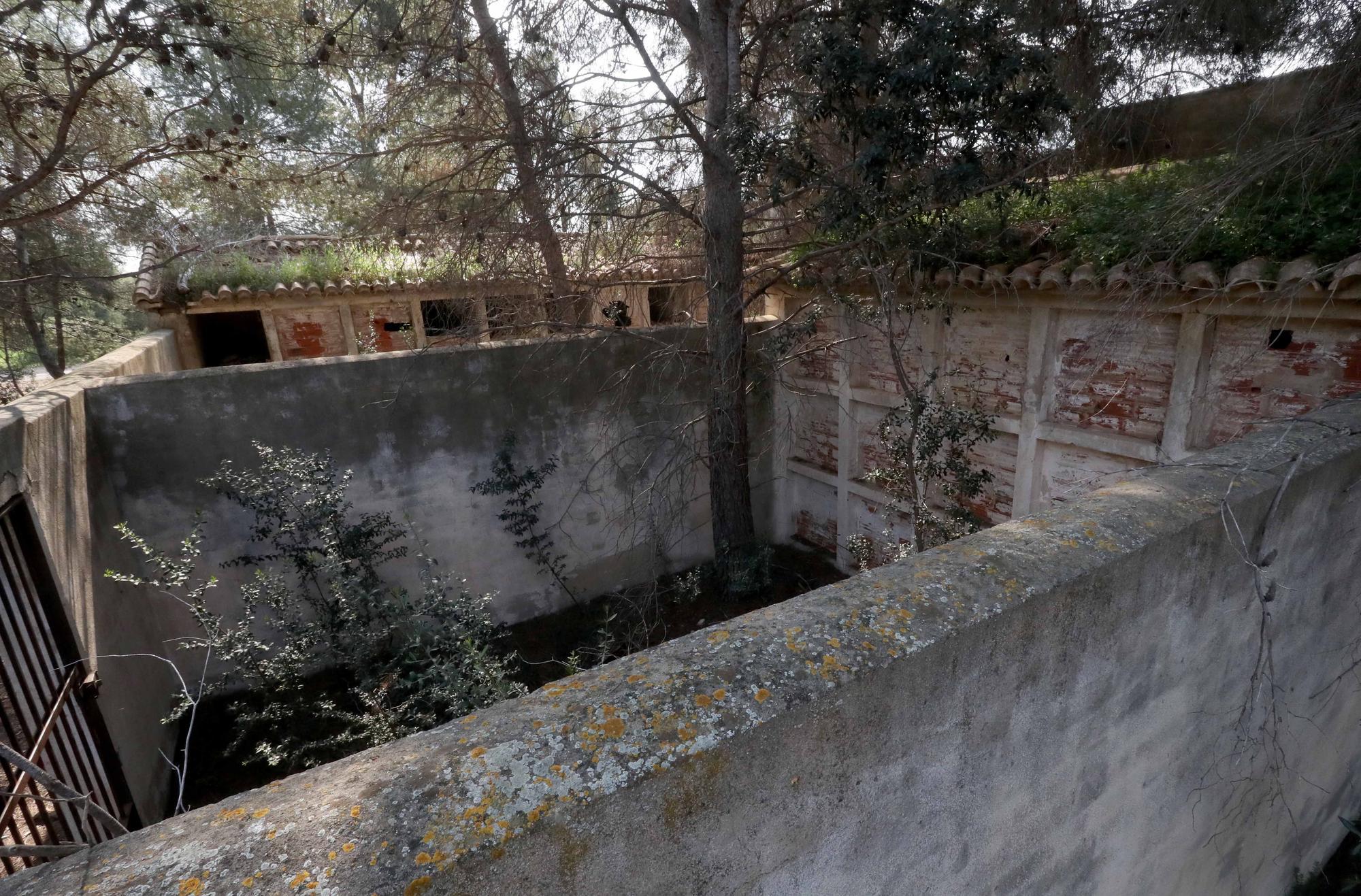 El cementerio abandonado de Moncada que te recordará a las películas de zombies