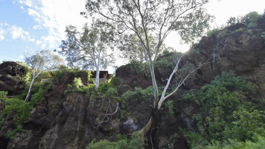 El Banco de Datos de la Biodiversidad de Canarias supera las 24.400 especies