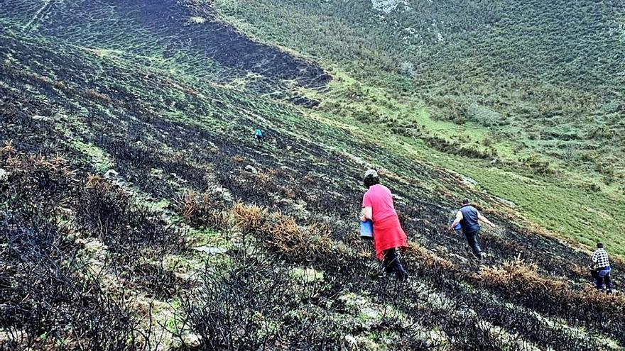 Sextaferia para recuperar el monte Río Nueva (Llanes)