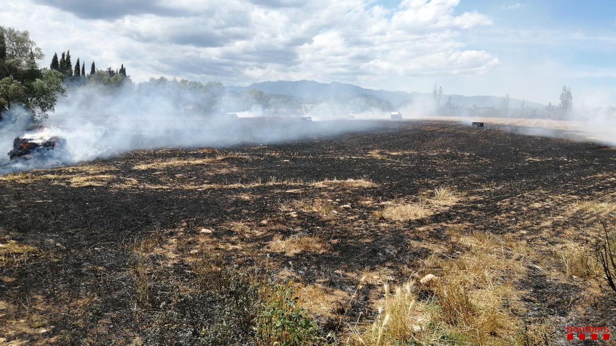 El camp calcinat a causa del foc.