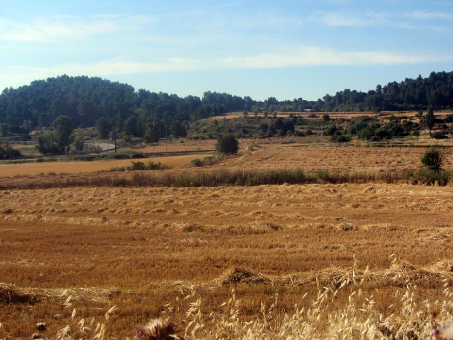 Pla de Bages. Fotografia enviada per un lector on podem observar un camp de cereals ben sec i acabat de segar. Es considera que el conreu dels cereals ha permès el sorgiment de les grans civilitzacions, ja que han estat objecte de l'agricultura.