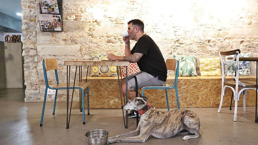 Beure's un cafè dins d'un bar de Girona amb clients peluts