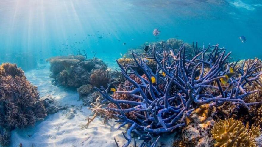 El tiempo se acaba para salvar los arrecifes de coral