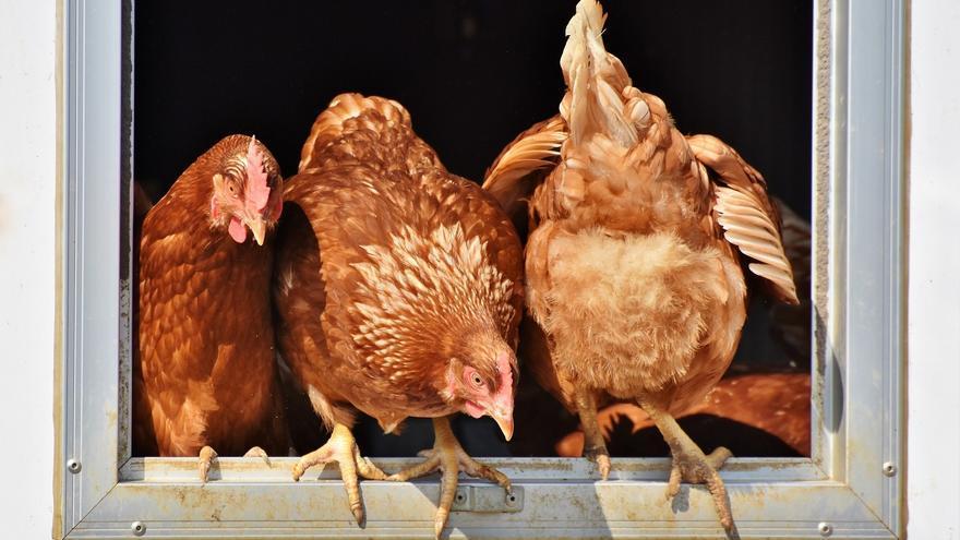 Mueren 4.000 gallinas tras un incendio en una granja de Tomiño