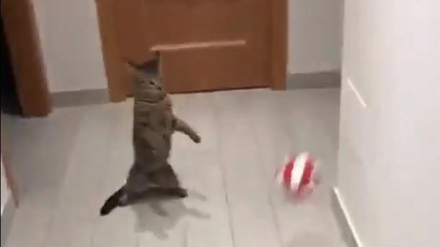 La 'gata portera' que quiere ser como Buffon arrasa en la red