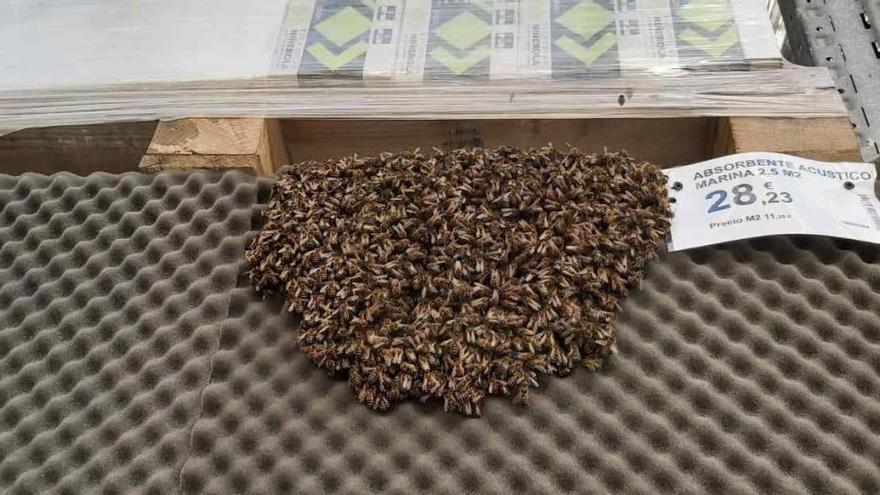 Evacuan una tienda por un enjambre con más de 3.000 abejas