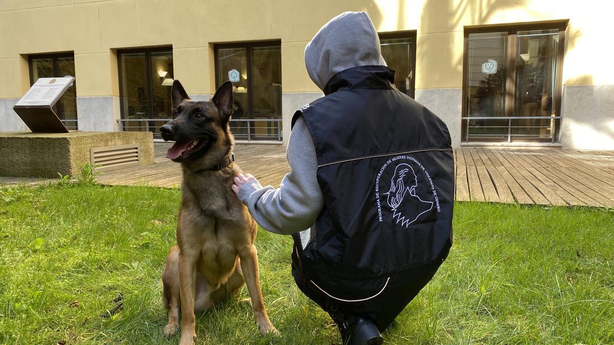 Proyecto Escan, centrado en la terapia emocional asistida con perros adiestrados para mujeres víctimas de violencia de género.