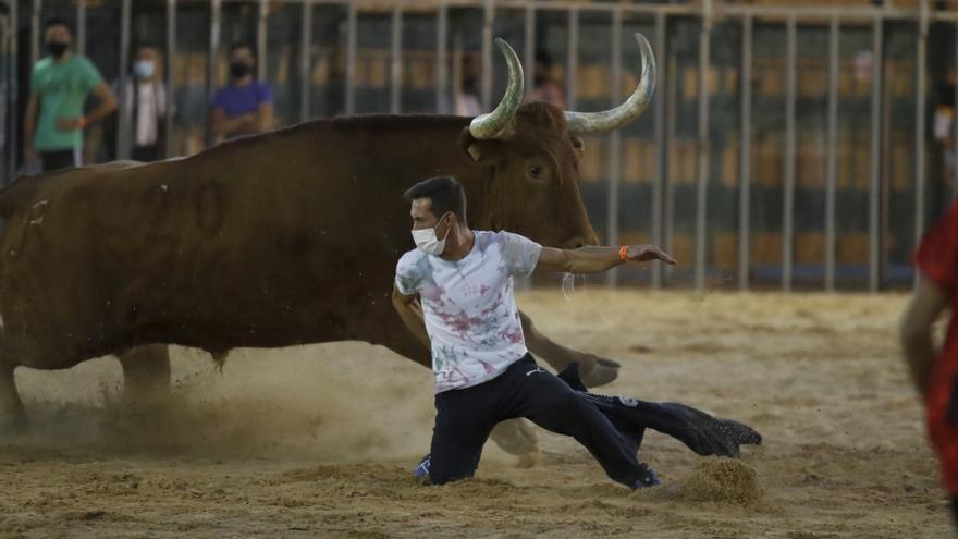 Los ayuntamientos de Castellón apoyan el retorno del bou al carrer