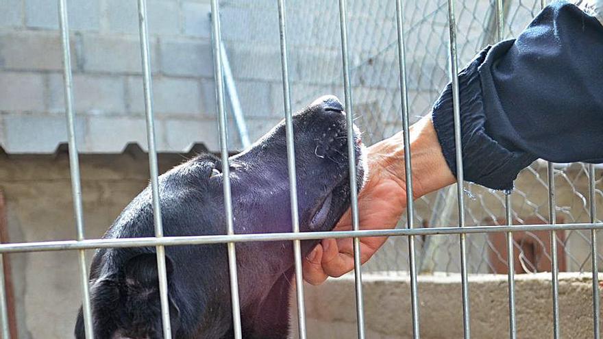 Procan dio en adopción en Benavente a 40 perros durante 2020