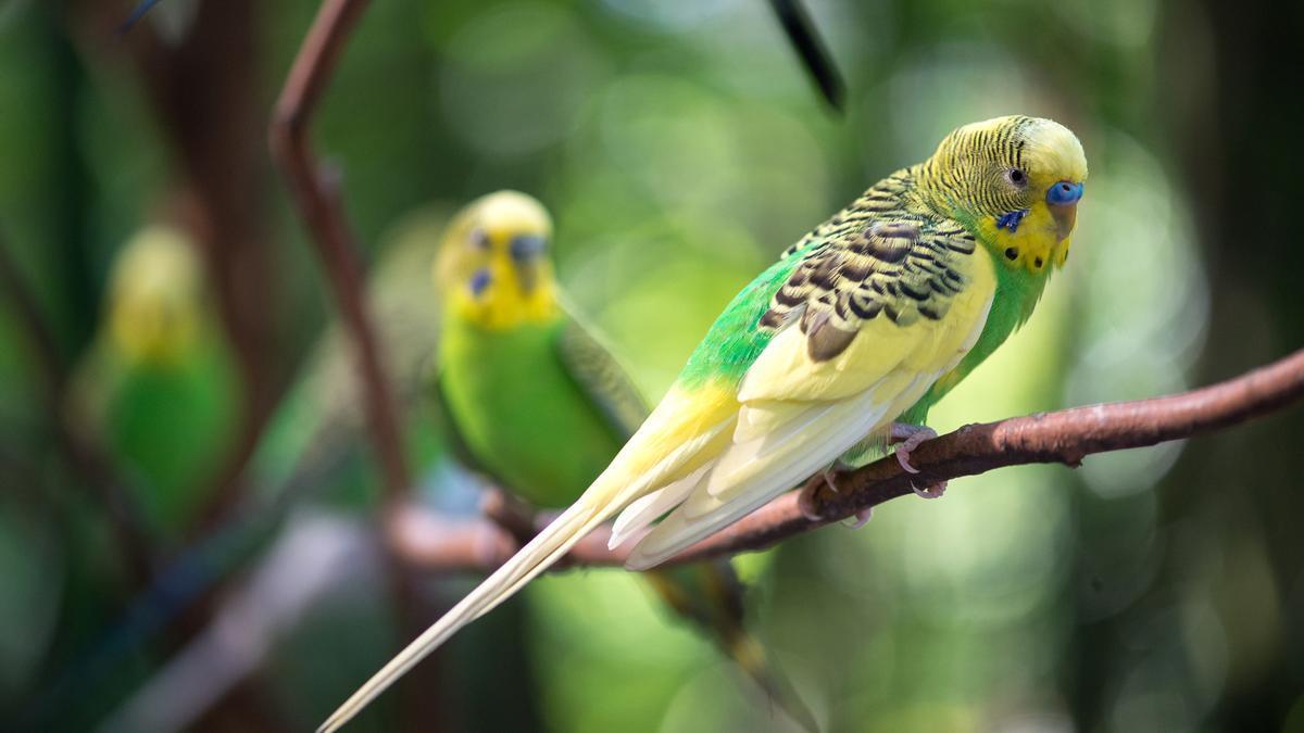 El estudio ha detectado un aumento del pico de algunas aves.