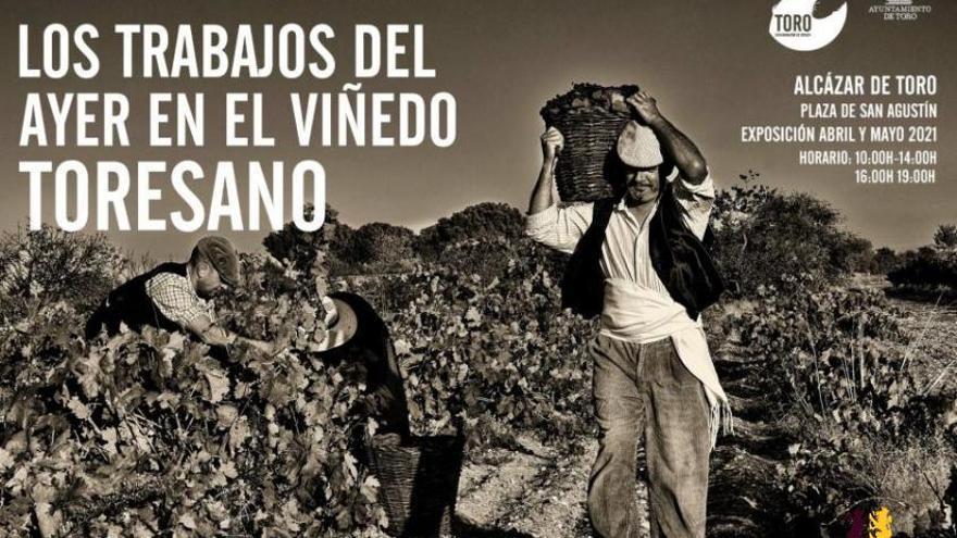 Exposición los trabajos del ayer en el viñedo toresano