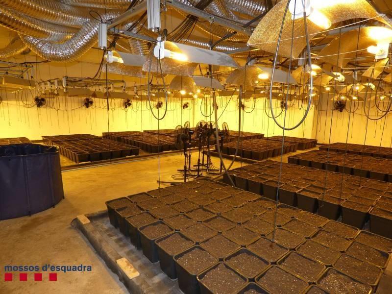 Els Mossos desmantellen una plantació de marihuana a Santa Llogaia d'Àlguema