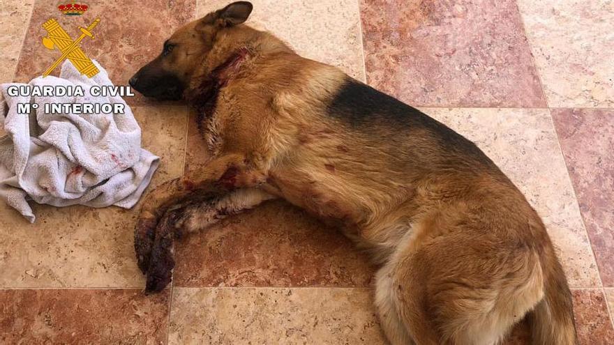 Dos detenidos en Sant Joan y la Vega Baja por extorsionar a un joven y apuñalar a su perro