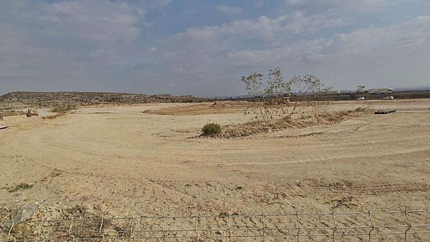 Denuncian la destrucción de flora protegida en Alcantarilla