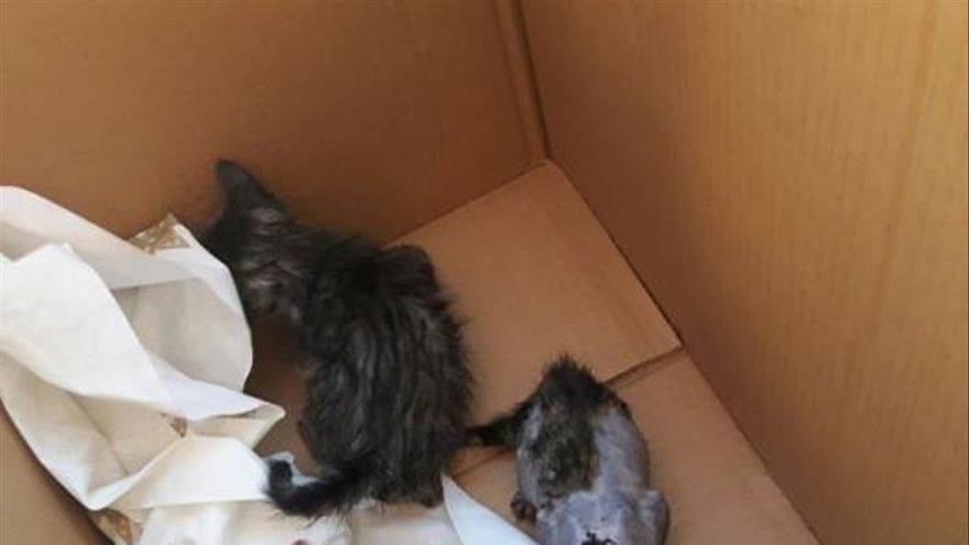 Brutal agresión a unos gatos recién nacidos en el Puerto