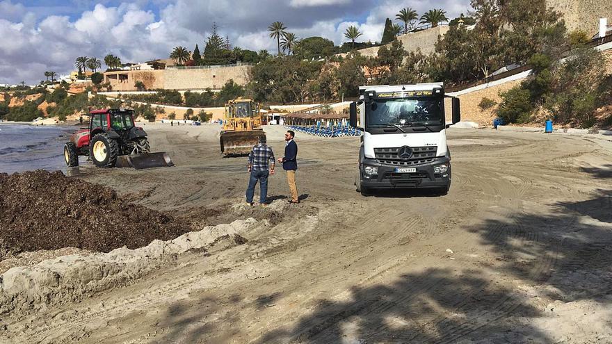 Orihuela gastará 67.100 euros en retirar los restos de Posidonia de sus playas
