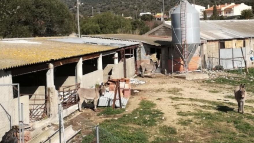 La Iaeden celebra el revés judicial contra la granja de Cantallops