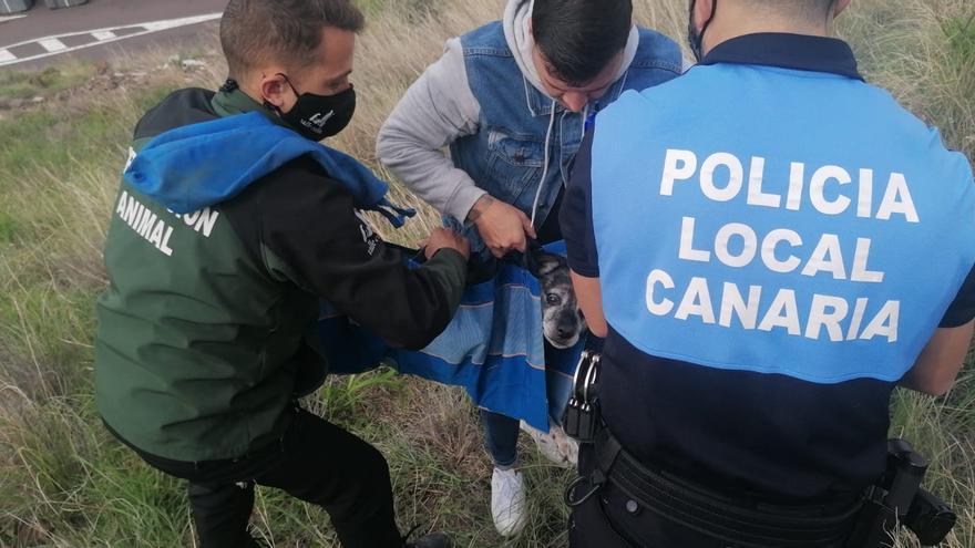 Así rescatan los agentes a un perro en Santa Cruz de Tenerife
