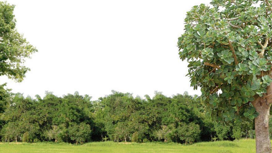 ¿De verdad es útil plantar árboles?