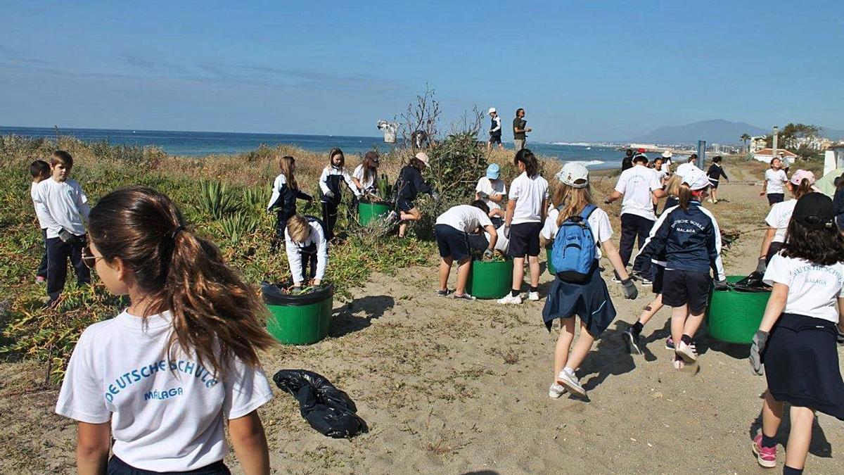 Escolares de Marbella realizan labores de conservación de una de las dunas del municipio