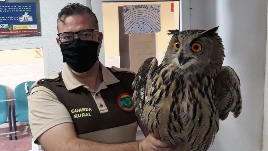 El Guarda del Club de Cazadores de Sagunto rescata un búho real herido