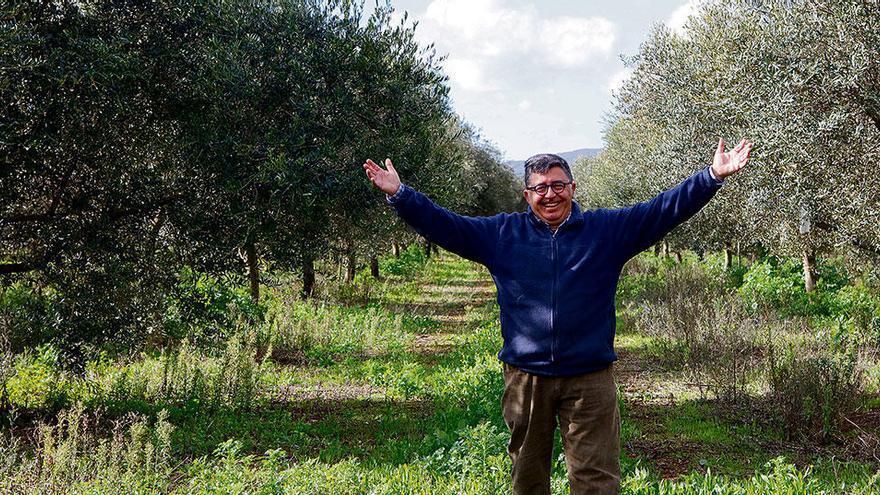 Günstig und gut: So steht es um das Olivenöl von Mallorca
