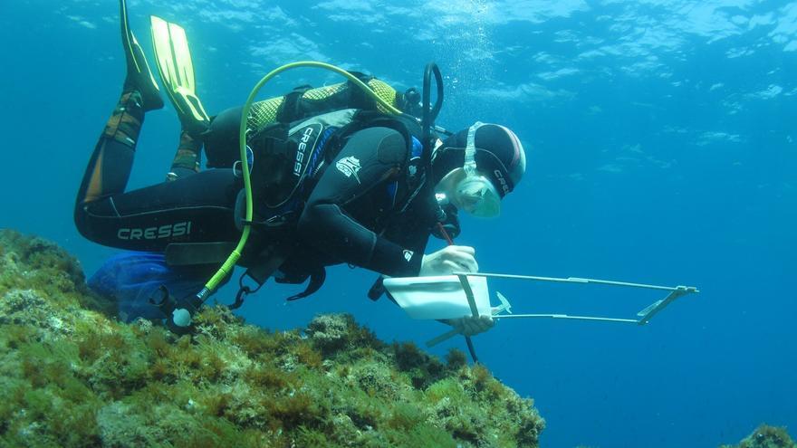Els promotors del parc eòlic marí de Roses engeguen dues campanyes de seguiment d'aus marines i cetacis