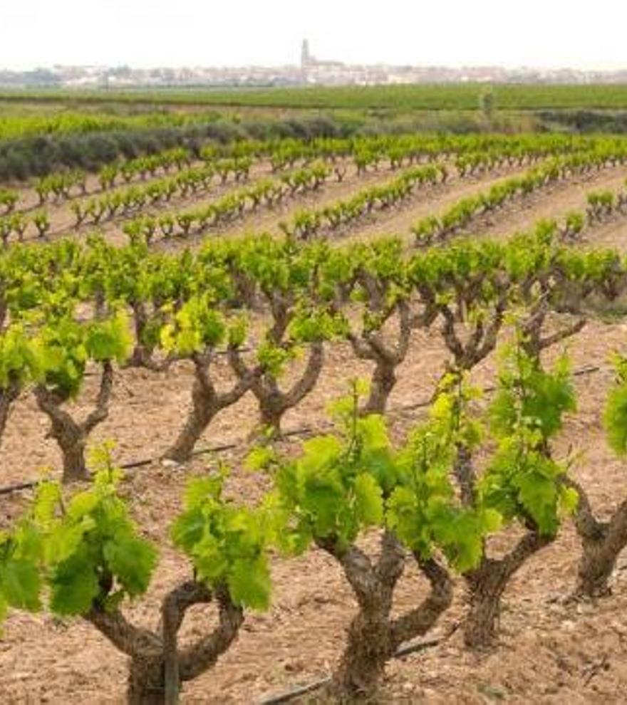 DO Valencia, vinos de corazón mediterráneo