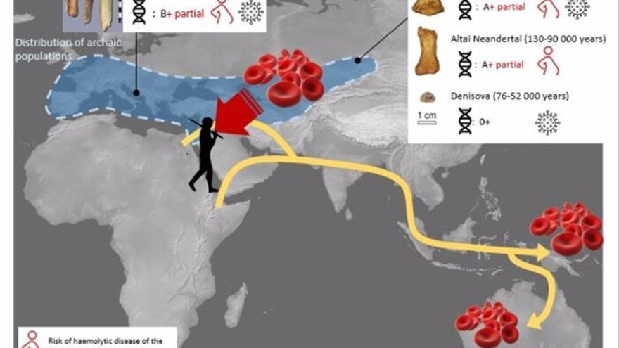 La sangre de neandertales y denisovanos confirma su origen africano