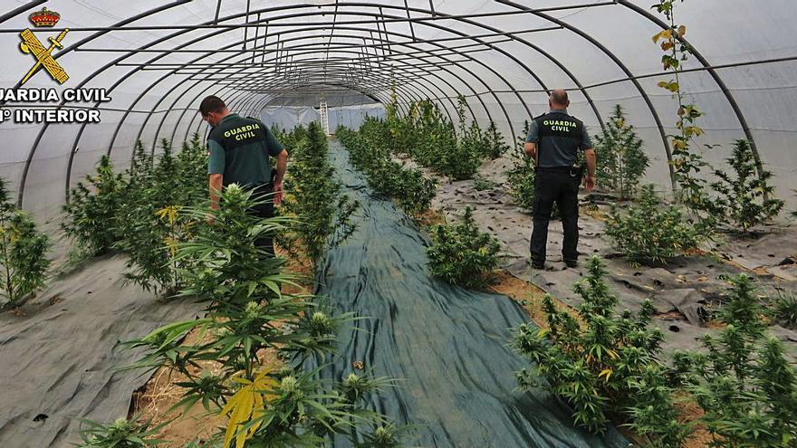 Hallan una plantación de marihuana en Ponte