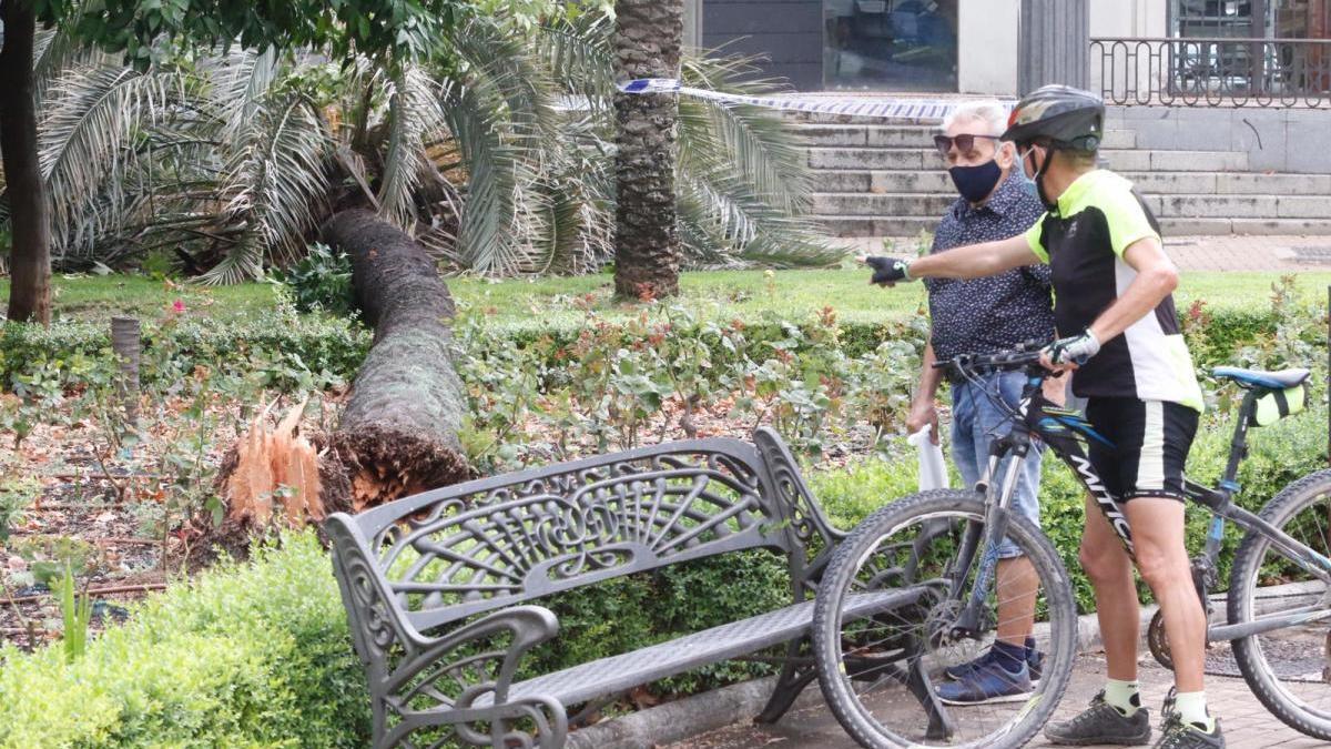 Un árbol se parte y cae en el colegio Pablo García Baena sin provocar daños personales