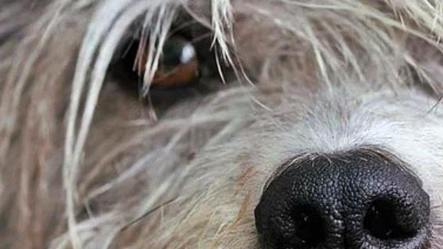 La dificultad de los animales miedosos para ser adoptados