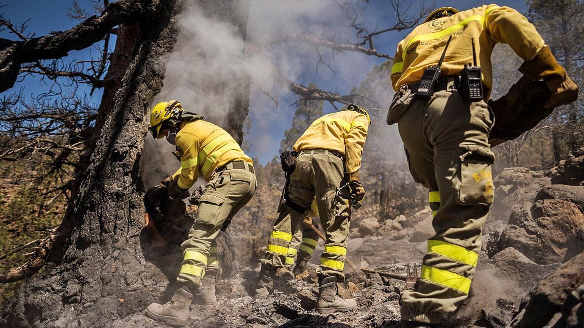Miembros de la Brifor del Cabildo durante el reciente incendio en los montes del municipio de Arico. | | ANDRÉS GUTIÉRREZ