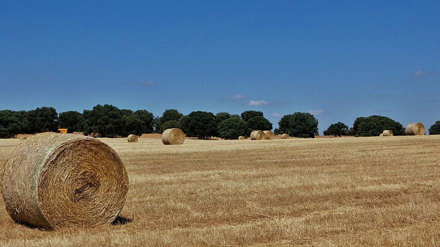 El rendimiento de la hectárea de cereal en Zamora baja un 27% respecto a 2020