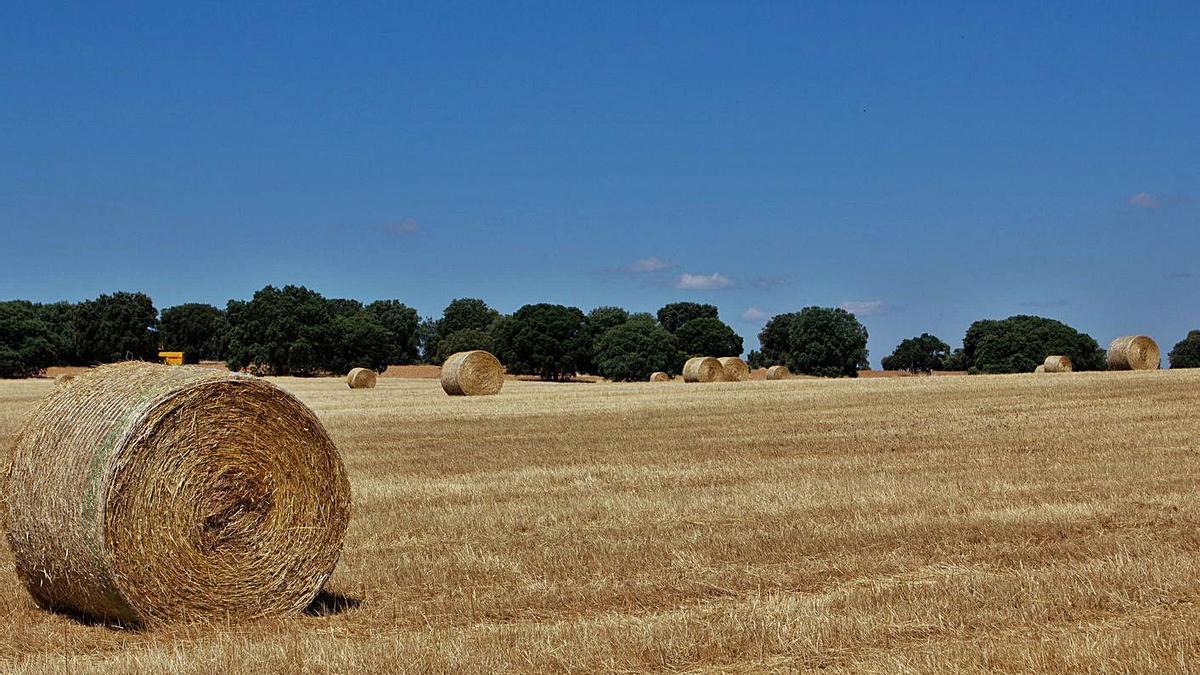 Una tierra cosechada en la comarca de la Tierra del Pan.   Ana Burrieza