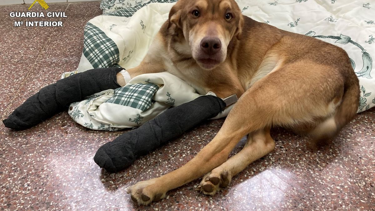 The abandoned puppy with two broken legs.