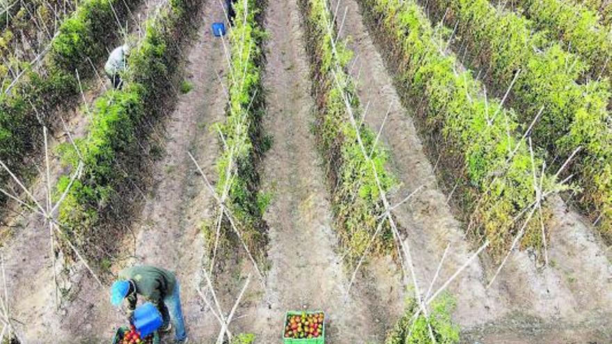 Ramaderia i cultius, sota l'impacte del canvi climàtic