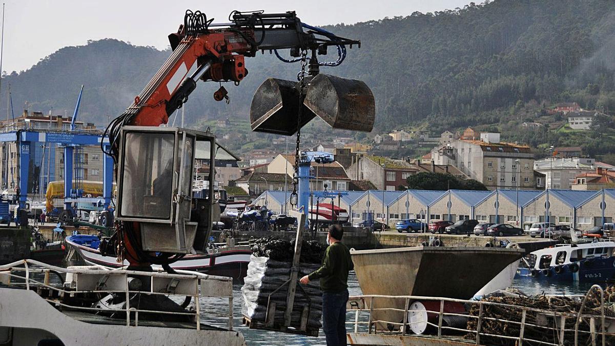 Bateeiros de Bueu, trabajando en la descarga de mejillón en el puerto.   | // GONZALO NÚÑEZ