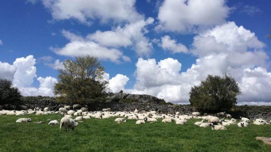 La Junta convoca ayudas para reposición de ganado autóctono