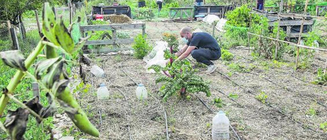 La pandemia ha provocado un interés por la agricultura en todos los segmentos de edad
