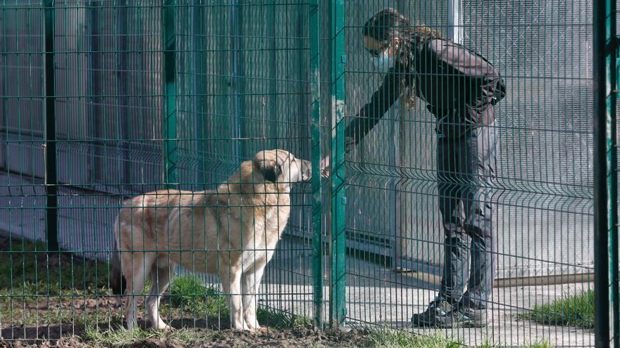 Oviedo prepara ya un nuevo contrato para la gestión de la perrera municipal