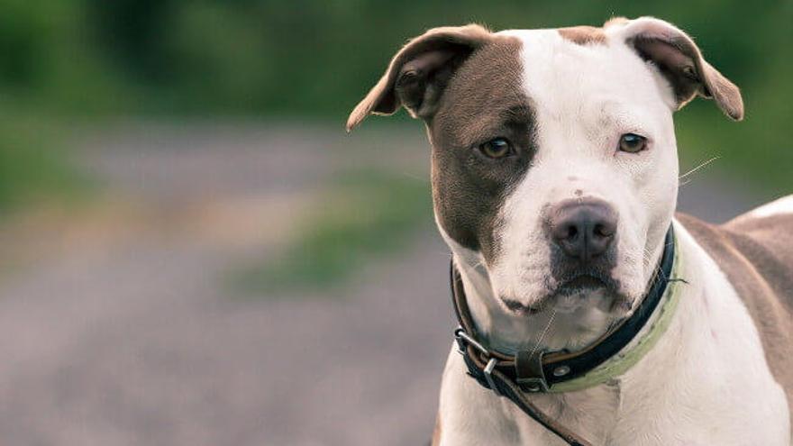 Trepa a un primer piso en Los Alcázares para intentar llevarse el perro de su ex