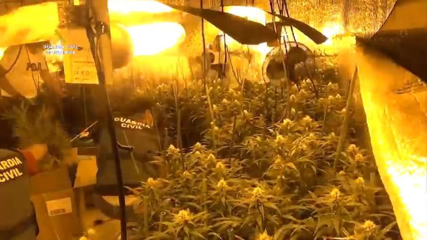 Detenidos en Zamora por cultivar marihuana en camiones frigoríficos