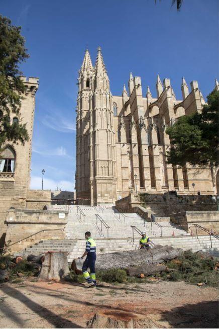 Holzfällerarbeiten rund um die Kathedrale