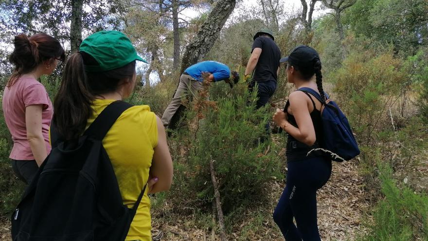 En marxa el curs de pelador de suro a Can Vilallonga de Cassà de la Selva