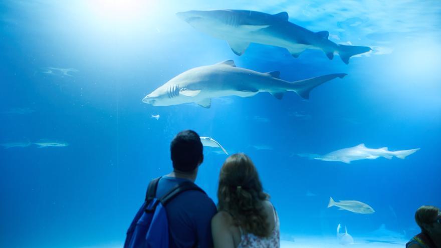 SORTEO Oceanogràfic | Consigue una de las 2 entradas dobles y pasa Halloween entre tiburones