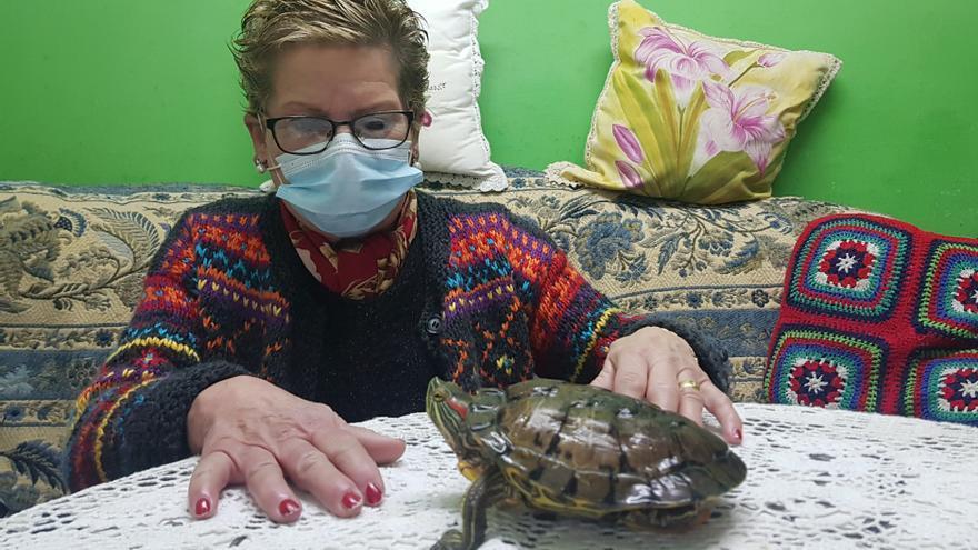 """La tortuga más longeva: """"Tortu"""" cumple 43 años convertida en la """"reina de la casa"""""""