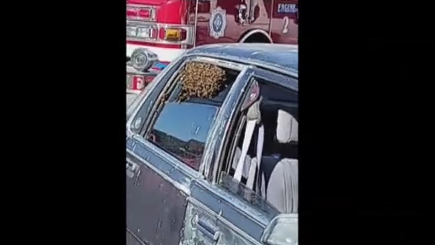 Miles de abejas se introducen en el interior de un coche en EEUU mientras el dueño hacia la compra