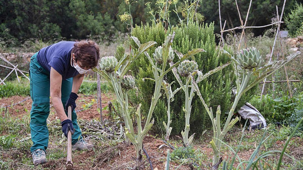 Una de las inquilinas labra la tierra para quitar las malas hierbas a sus alcachofas. | URQUÍZAR